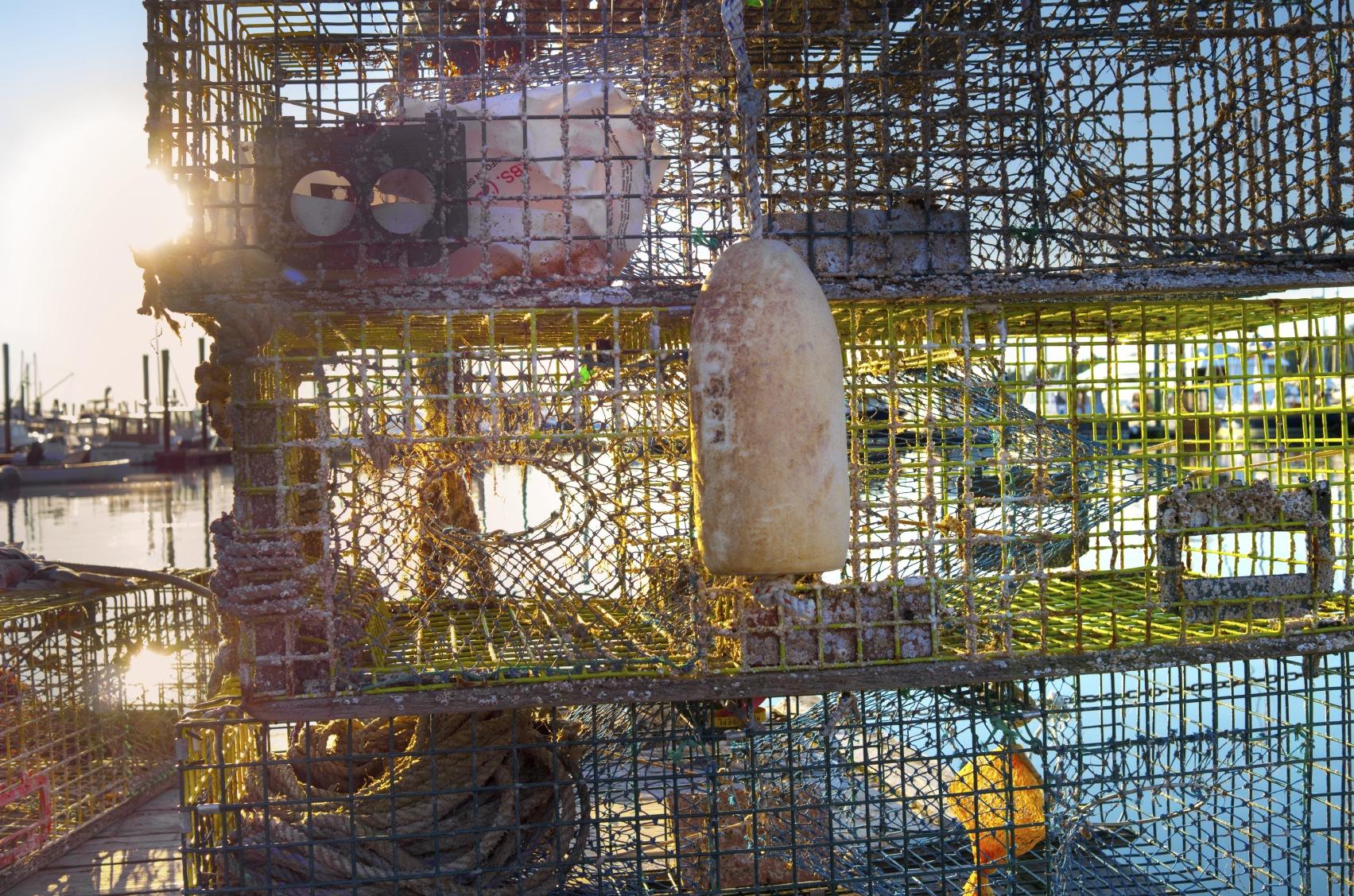 Lobster traps on dock at sunrise. image: michael krinke