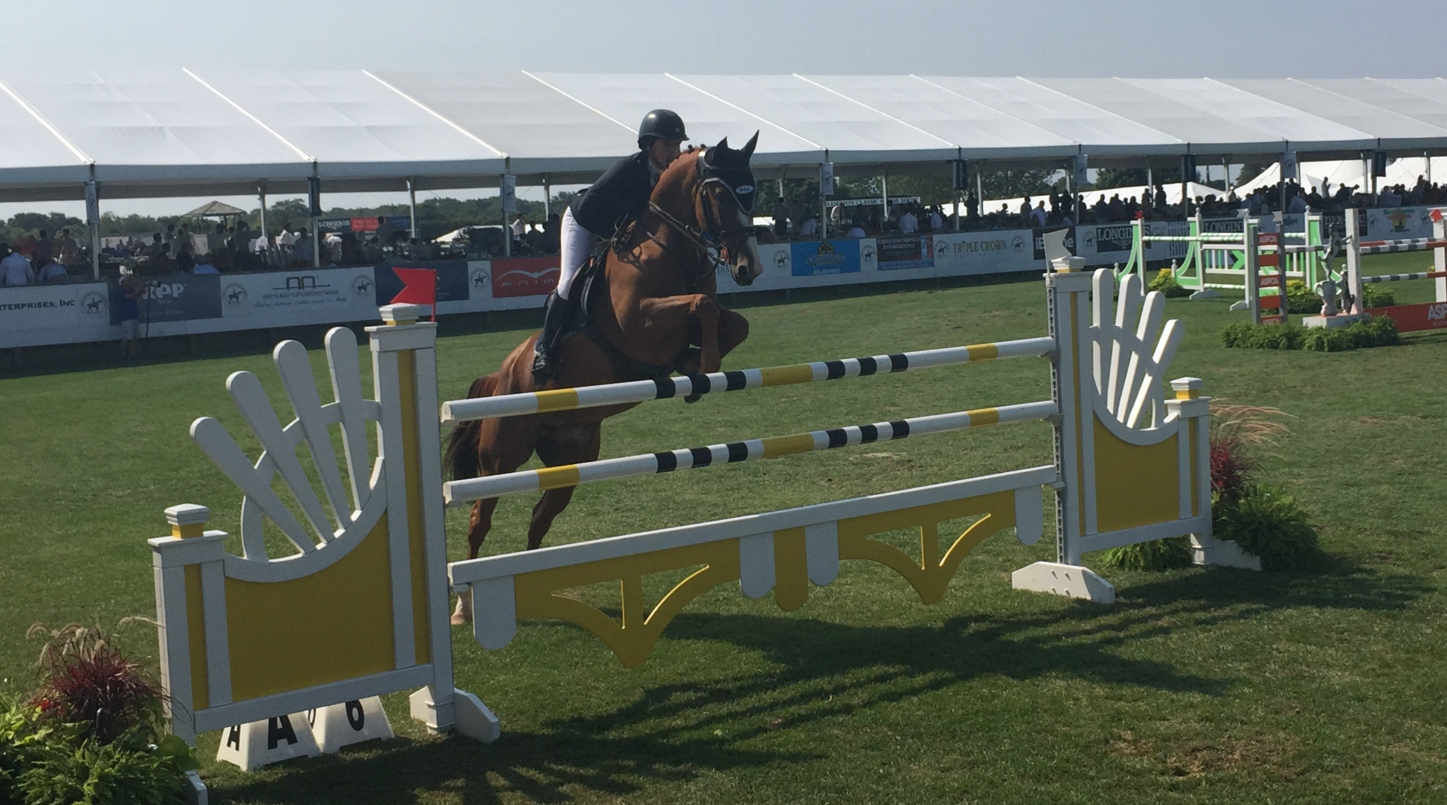 A competitor in the $25,000 Campbell Stables Show Jumping Derby.