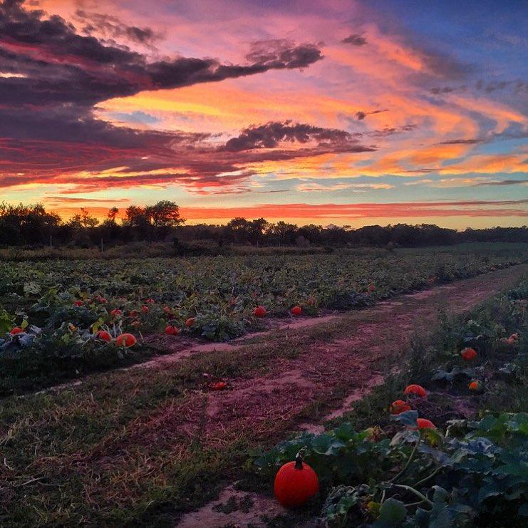 Pumpkin Picking Long Island Riverhead