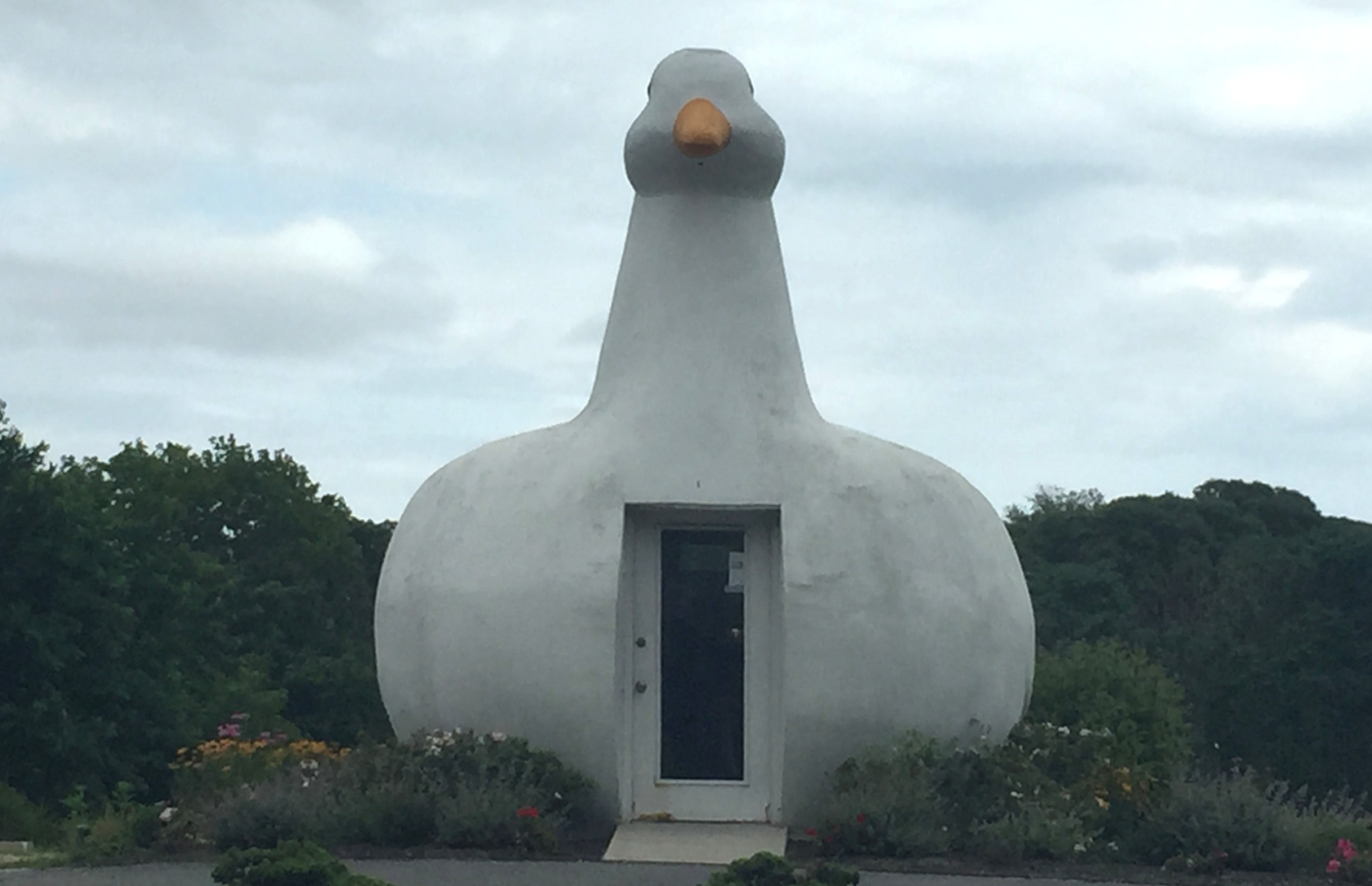 the big duck