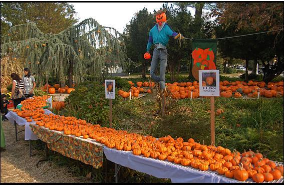 UUCCN pumpkin