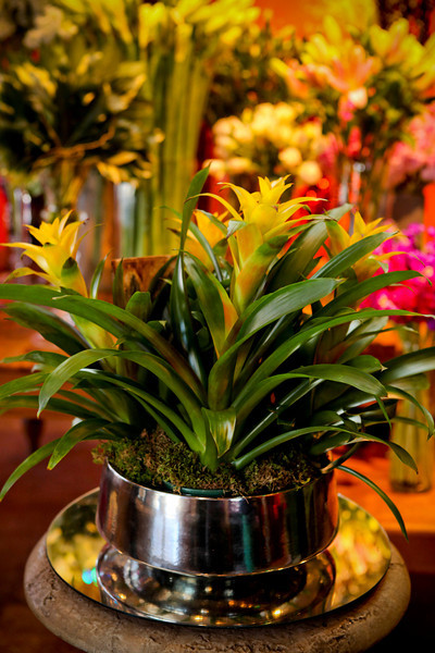 Colorful orchids and bromeliads add pop to any room image: alayna kanata