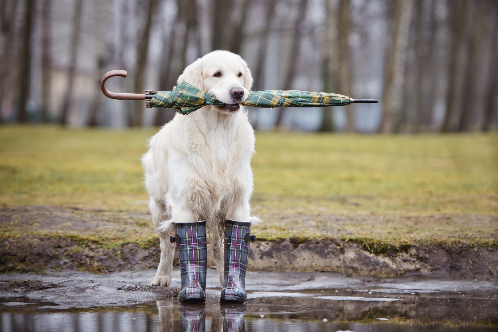Help your friend's pup brave the elements image: alona rjabceva