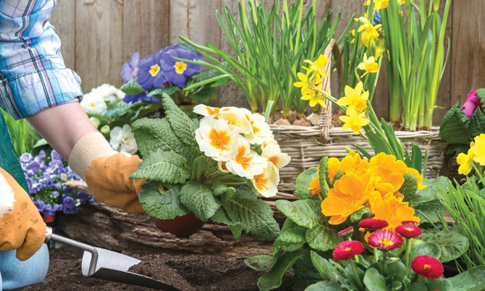 Pro Tips To Make Your Garden Grow | Long Island Pulse Magazine