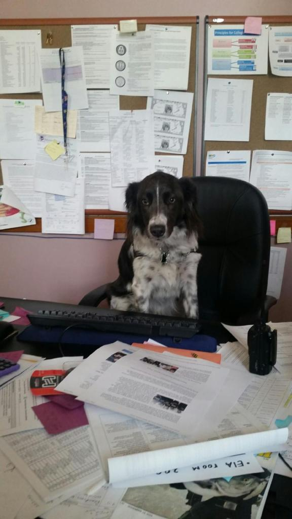 Shelby At Desk