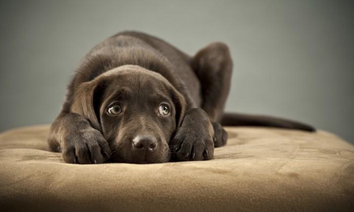 vendaje para perros asustados