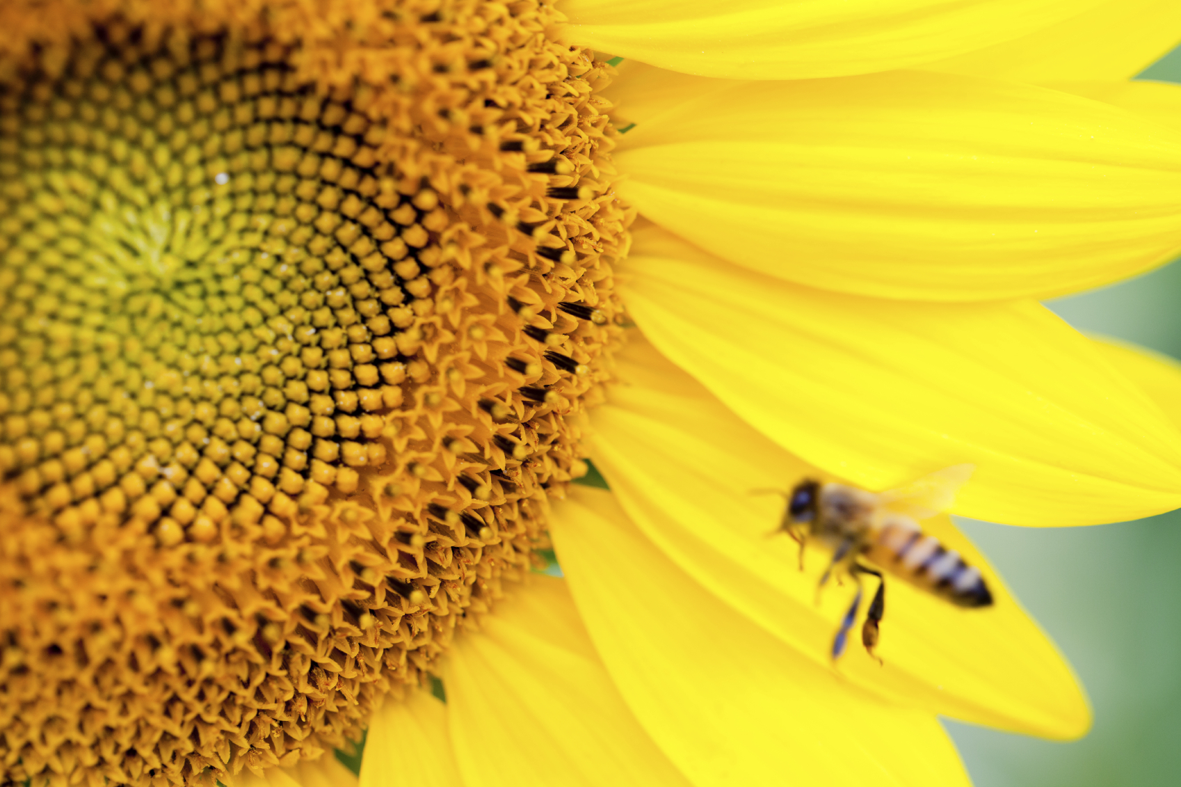 bees long island