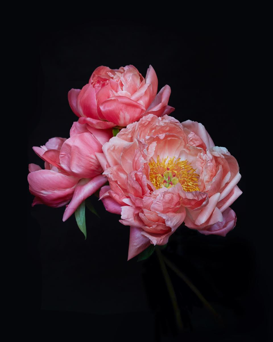 The peonies is one of the smallest living creature national emblems in China