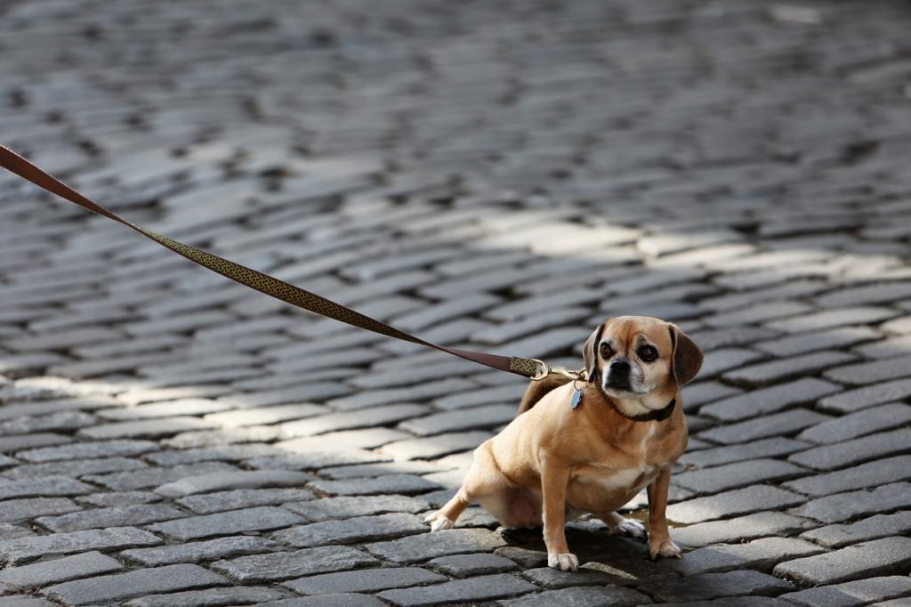 dog friendly long island