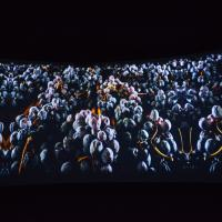 PANORAMA had scenes for the the vino-crazed. Images of fresh grapes scanned the screens. image: casey kelbaugh