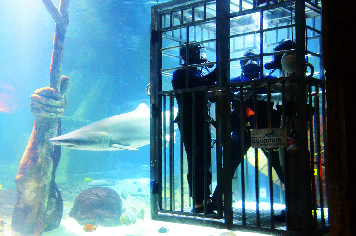 Shark-Dive-Wedding-in-the-Tank