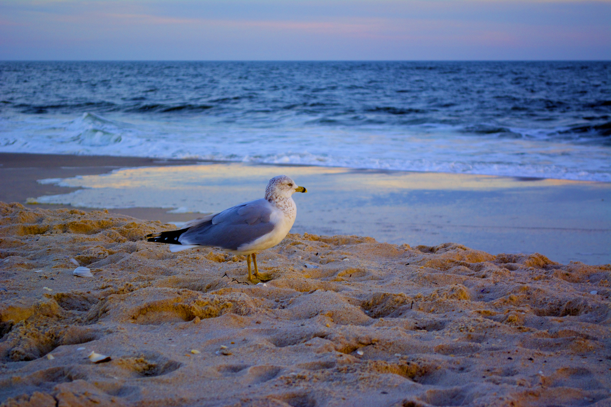 Long Island, New York. A seagull on Jones Beach.