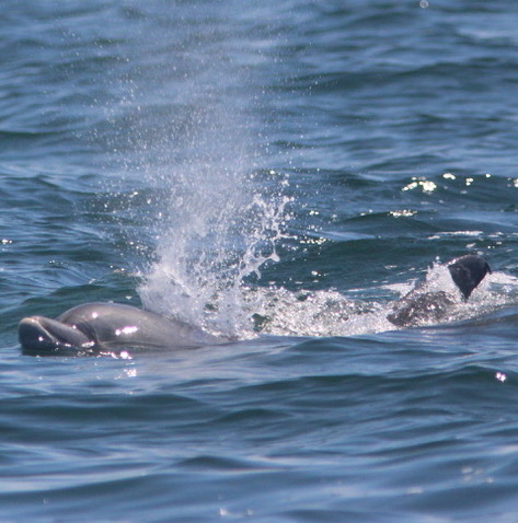 instagram dolphins