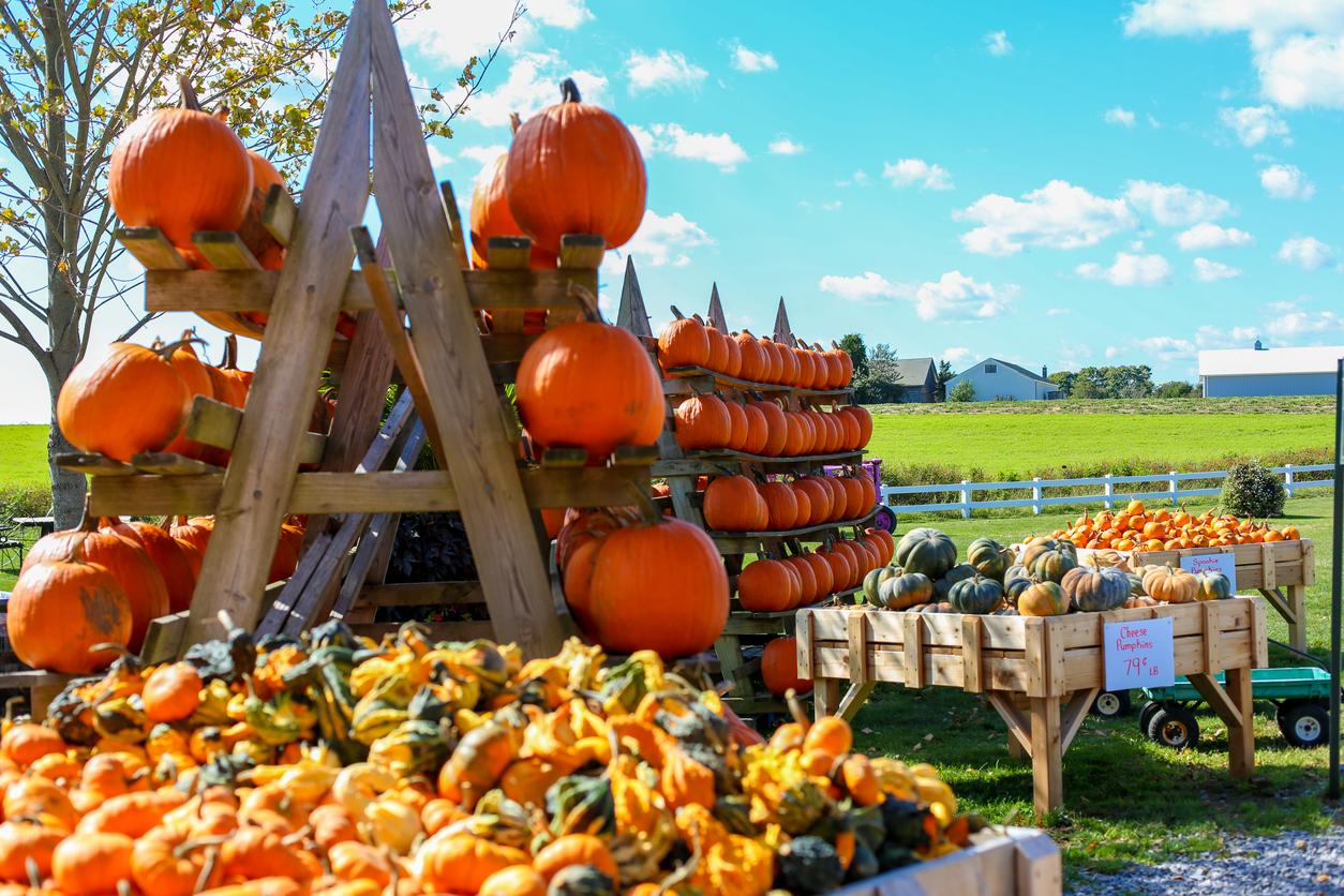 Pumpkin Fair Farmer's Market
