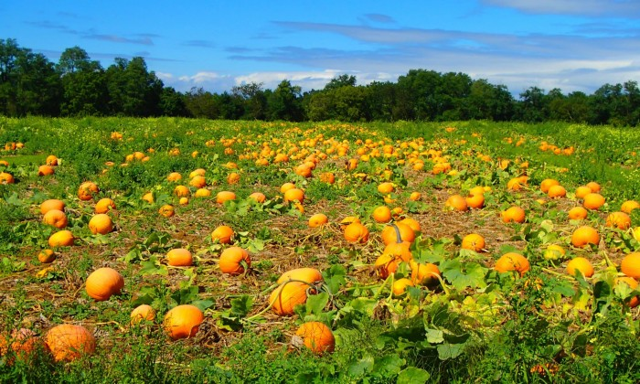 pumpkin patches near spanish fork