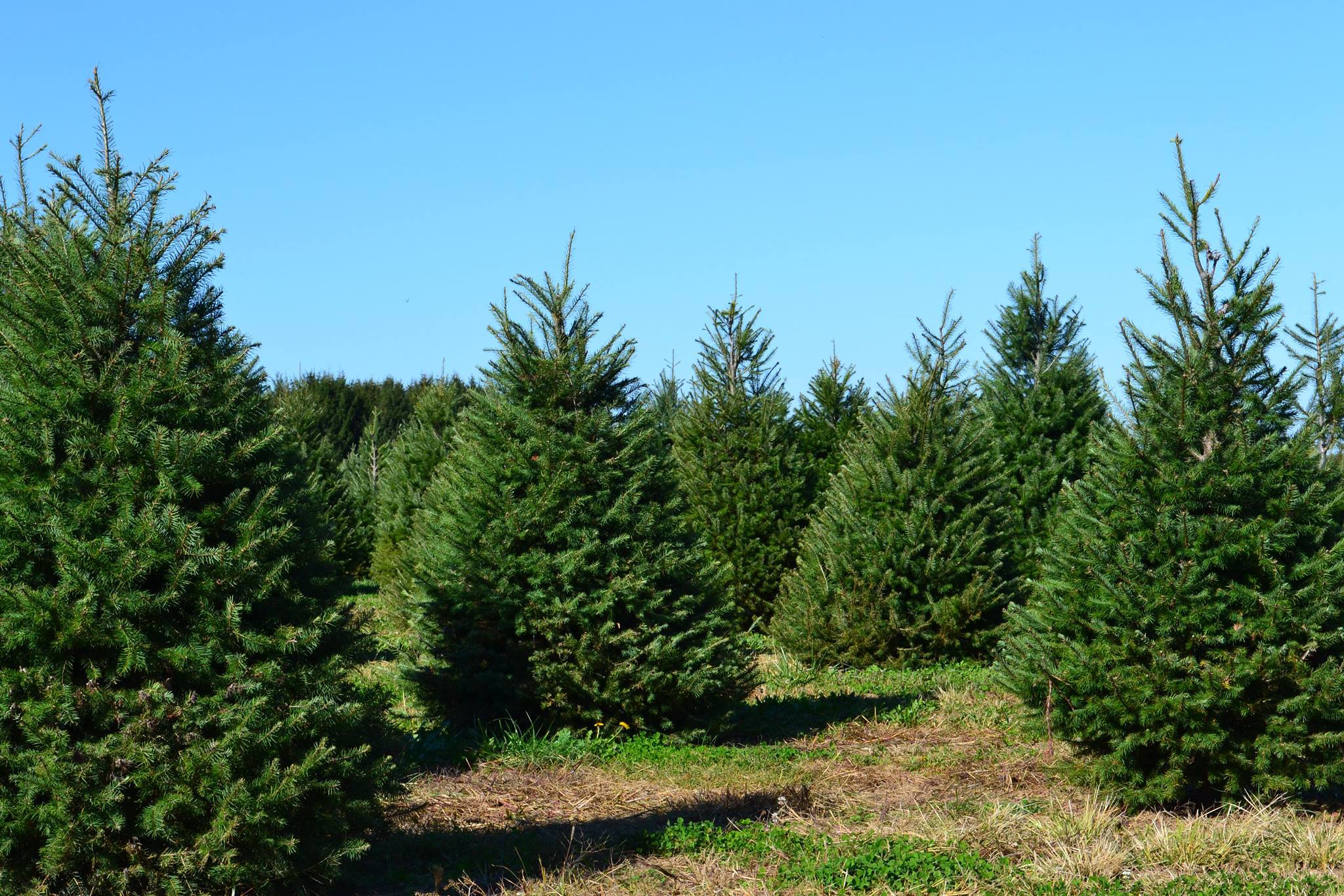 image: www.facebook.com/santaschristmastreefarm