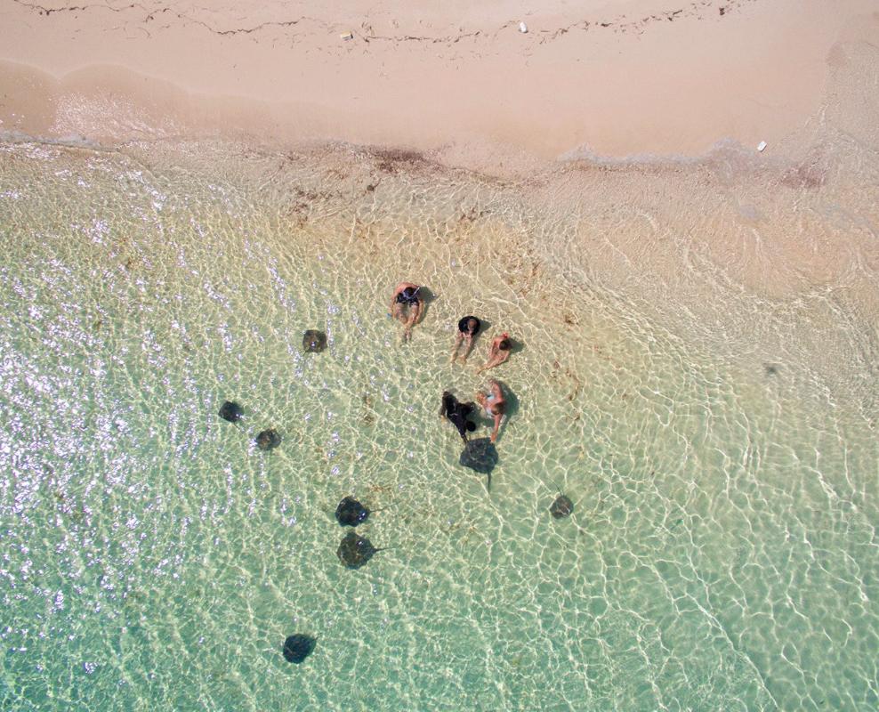 Stingrays at Honeymoon Harbor