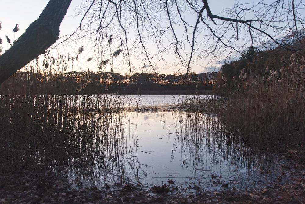 Momoweta-Pond-5I5A3924