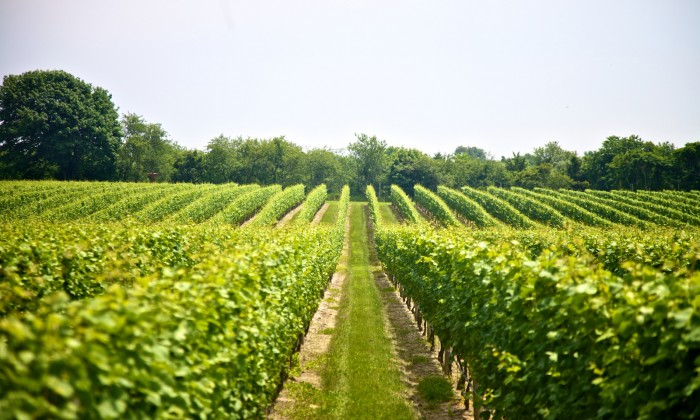 3 North Fork Wineries With Delicious Food Pairings | Long