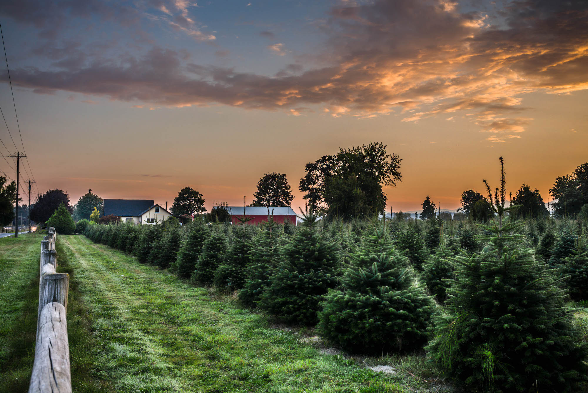 7 of the Best Long Island Christmas Tree Farms | Long ...