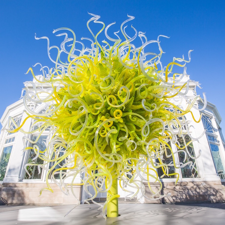 Chihuly Exhibit Lights Up New York Botanical Garden Long Island
